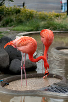 Day Glo Flamingo